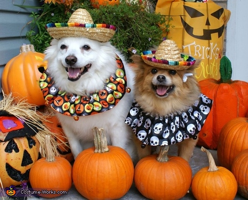 Pancho and Villa, Mardi Gras Butterfly Dogs Costume