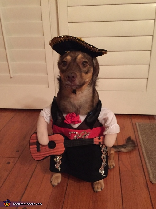 Mariachi Dog Costume