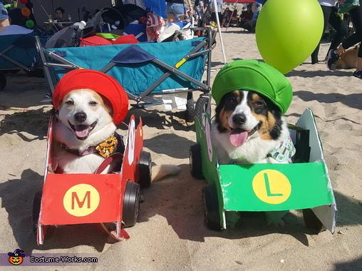 Mario And Luigi Dogs Costume
