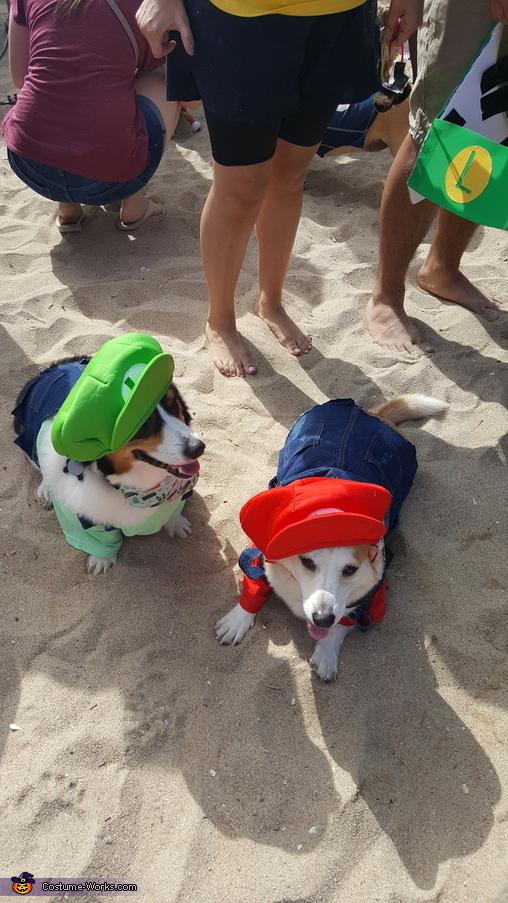 Mario And Luigi Dogs Costume Photo 22