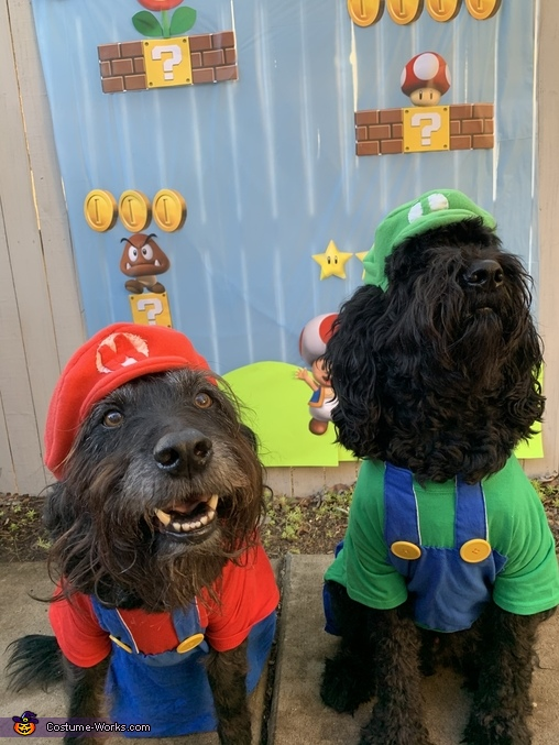 Mario & Luigi Dogs Homemade Costume