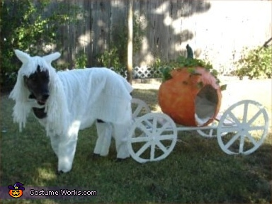 White Horse & Pumpkin Carriage - Homemade costumes for pets