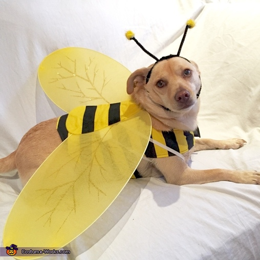 Max-Bee Costume