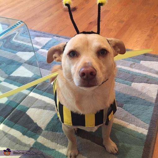 Jax the bee, Max-Bee Costume