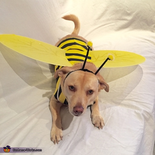 Jax, Max-Bee Costume
