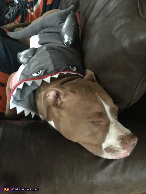 Our sleepy shark getting a nap in before trick or treating, Mermaid, Lifeguard & Shark Costume