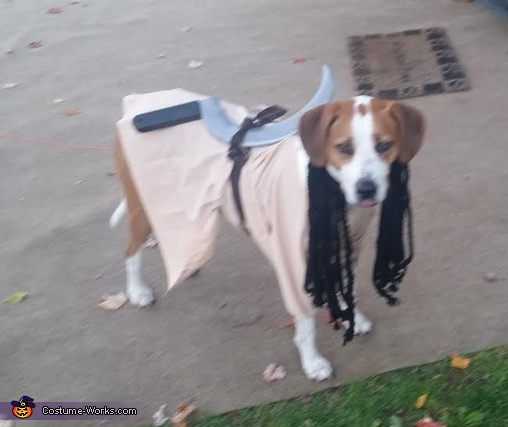 Tessa as Michonne 2, Michonne Dog Costume