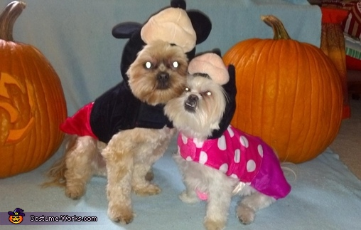 Mickey & Minnie Eeyore and Tigger Pet Costume