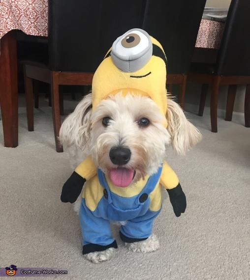 Smile for the camera, Minion Dog Costume