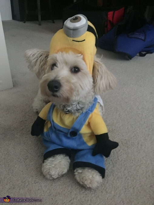 'What y'all looking at?', Minion Dog Costume