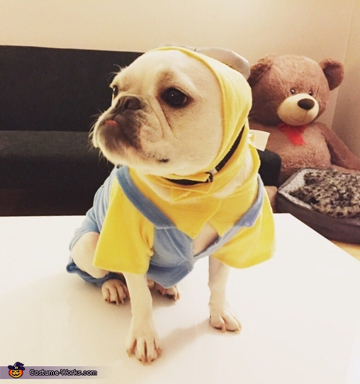 Minion French Bulldog Costume
