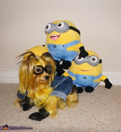 Somi the Minion doesn't want to make a pyramid with the other Minions!, Minion from Despicable Me Costume