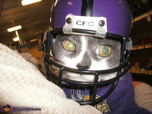 Minnesota Vikings Quarterback Cat Homemade Costume