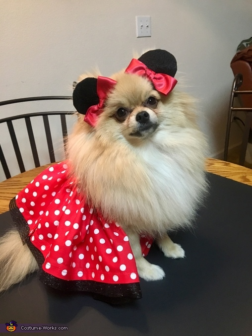 Minnie Belle Costume