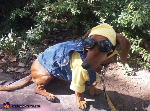Minon Dog Costume