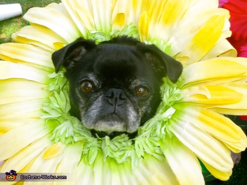 Close up dog flower costume 1, Miracle Grow & Flowers Costume