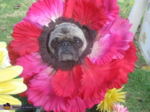 Close up dog flower costume 2, Miracle Grow & Flowers Costume