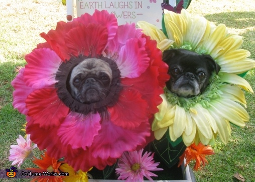 Pug Flower costumes 1, Miracle Grow & Flowers Costume