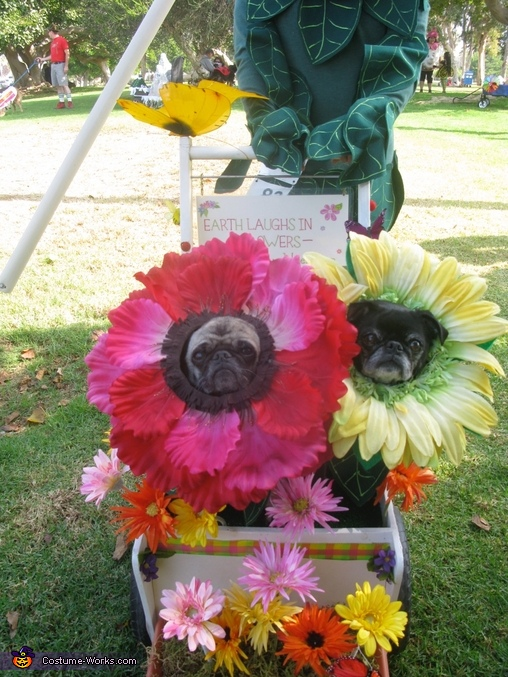 Pug Flower costumes 2, Miracle Grow & Flowers Costume