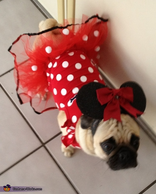 Minnie Mouse - Homemade costumes for pets