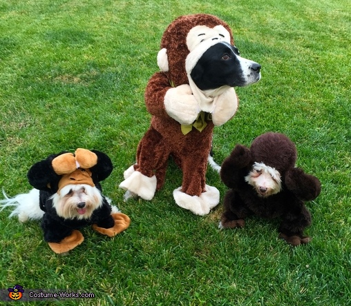No Evil Monkeys Dogs' Costume