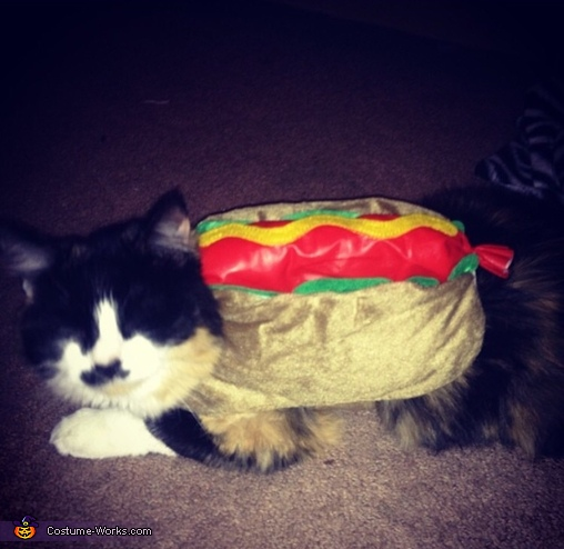 Hotdog, Monster Cat Costume