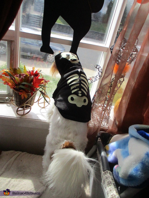 Phoebe as Bag-o-Bones (pet pic), Monster Mash Costume