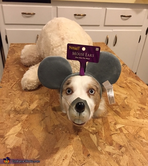 Mousetrap Dog Homemade Costume
