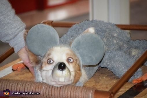 Cutest mouse ever, Mousetrap Costume