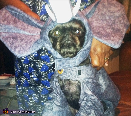 Elephant Dog Costume