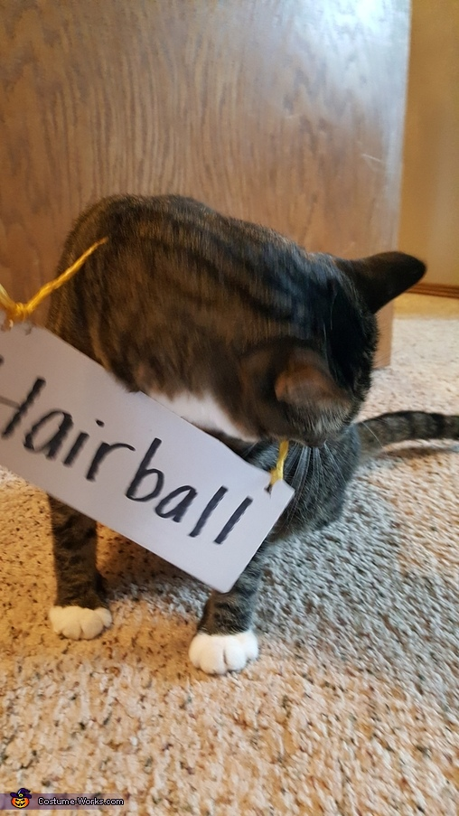 Hairball (more interested in eating the string), Mr. Clean Clan Costume