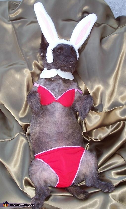 Mr. Playboy Bunny Dog Costume