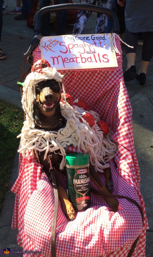 Taking a break at the pet parade in  his spaghetti and meatballs stroller, Mr. Spaghetti and Meatballs Costume