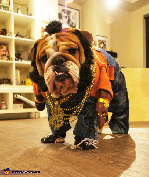 Mr T Doggie Dog Costume