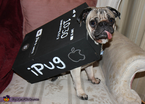 iPug - Homemade costumes for pets
