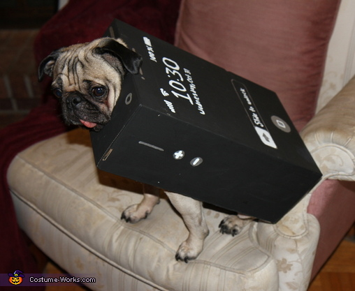 Homemade iPug Costume for Dogs