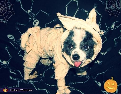 Mummy's Boy, Mummy Dog Costume