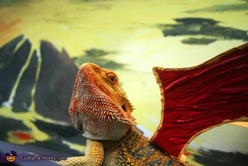 Munch the Dragon Homemade Costume