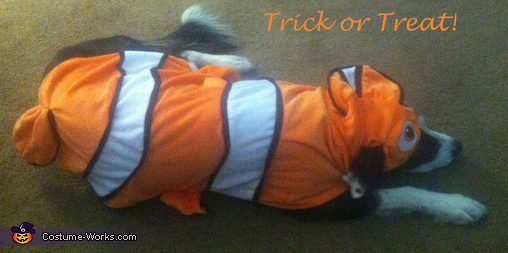 Finding Nemo Dog Costume