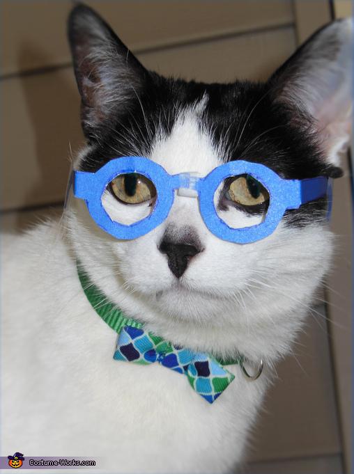 Nerdy Professor Cat Costume