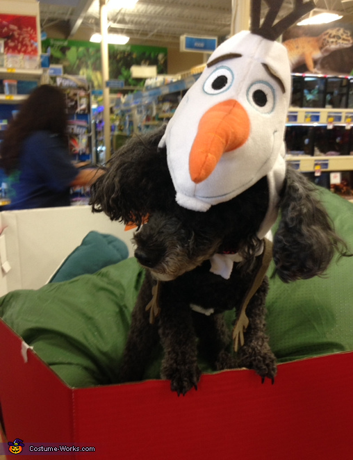 Olaf Dog Costume