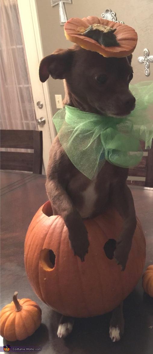 RICCO the pumpkin model, Olaf Dog Costume