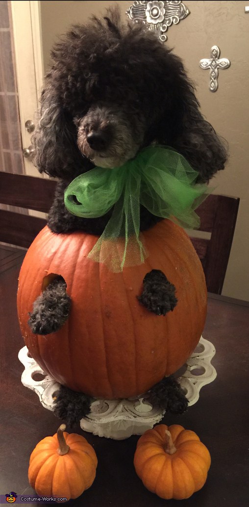 Gigi the pumpkin, Olaf Dog Costume