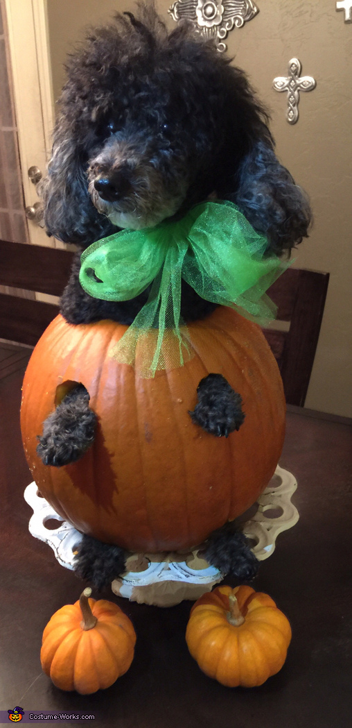 Gigi pumpkin model I'm so done take 3, Olaf Dog Costume