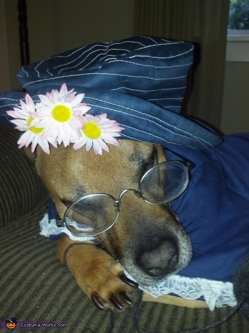 Old Lady Dog Costume