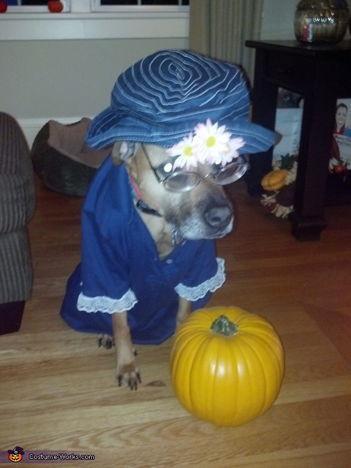 Old Lady Dog's Costume
