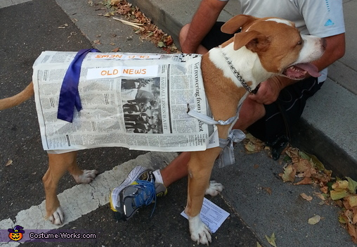 Old News Dog Costume