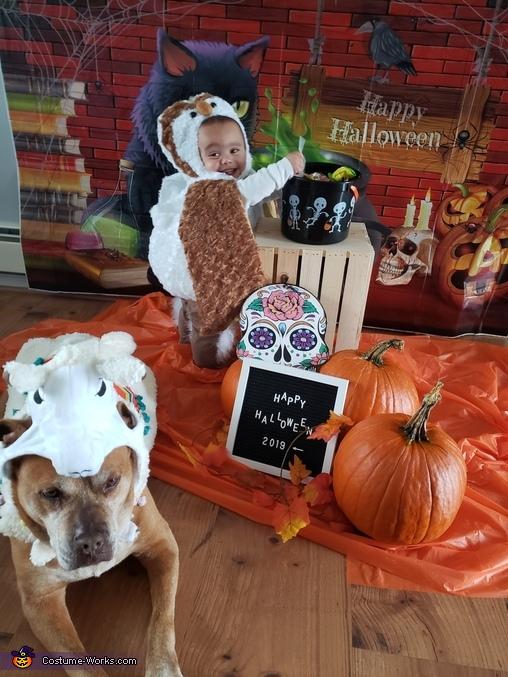 'My best friend is a llama', Owl Costume