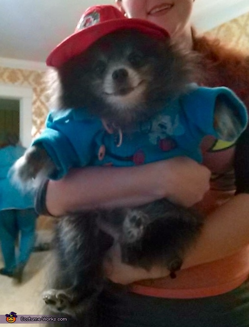 Paddington Bear Costume & Paddington Bear Dog Costume