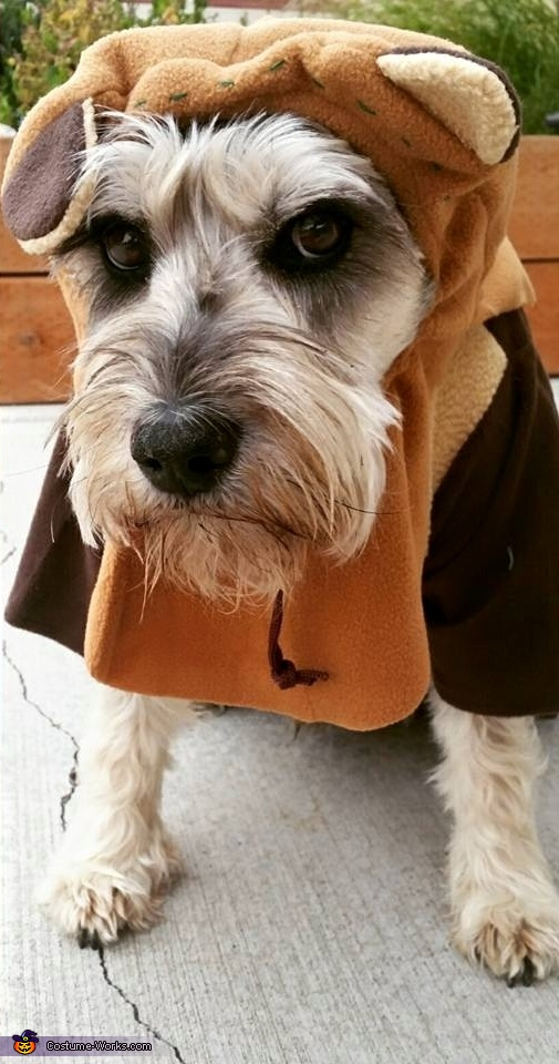 & Papa Ewok Dog Costume